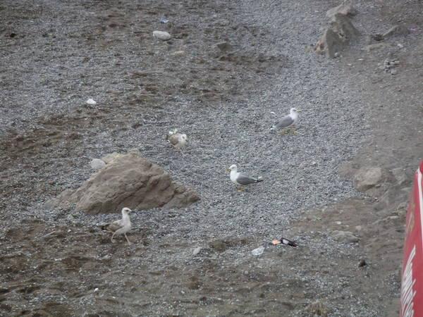Симеизский пляж