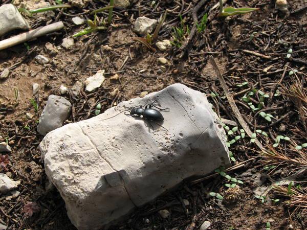 Жук на камне
