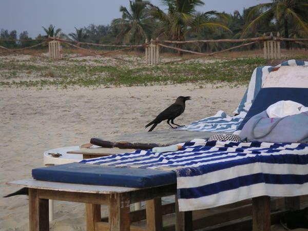 Ворона что-то тырит у юзера