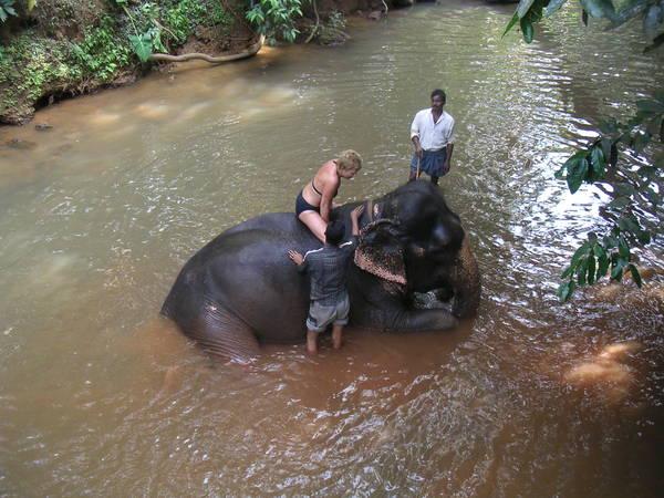 Юзербейз купает слона